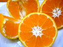 ギュッと味が濃縮 本場紀州和歌山の小粒みかん  5kg 2,800円【送料無料】