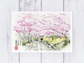 哲学の道の桜‐3 ( ポストカード 絵葉書 絵葉書 絵はがき 春 桜 哲学の道 疏水 水彩画 風景画 京都 和風 )