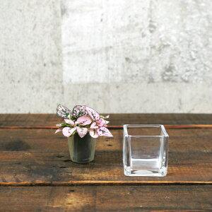 【器】 ガラス ブロックS(50) ハイドロカルチャー 向き
