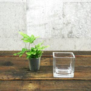 【器】 ガラス ブロックM(60) ハイドロカルチャー 向き