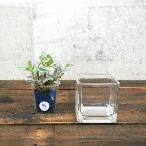 【器】 ガラス ブロックL(75) ハイドロカルチャー 向き