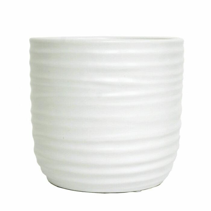 【器】 ウェーブ130ホワイト ハイドロカルチャー苗13パイ用 観葉植物