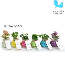 観葉植物 【パキラ シェフレラ サンスベリア ほか、いろいろ選べる】サンドボトル ラウンド 植物セット