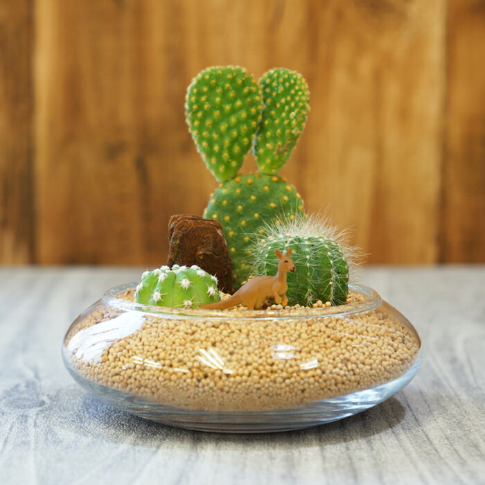 観葉植物 小さなサファリ01 ガラスベース サボテン 寄せ植え