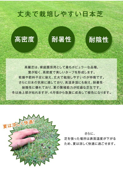 熊本直送高麗芝天然芝