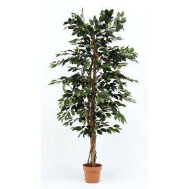 不二貿易 観葉植物 フィカス 1124 A 19840 FJ-52662【納期目安:4/下旬入荷予定】