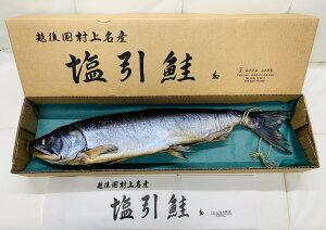 新潟 村上産 塩引き鮭 本造り(尾っぽしばり・腹切り残し)1本 約5kg 山正鮮魚のこだわり塩引き鮭