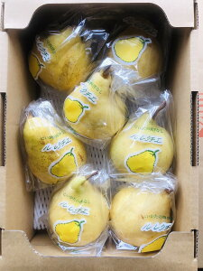 ルレクチェ 新潟産 松下農園 良品 2kg 6個〜7個 ギフト 外箱あり
