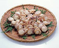 ベビーホタテ1kg貝類 魚介類食材 【冷凍食品】【業務用食材】【8640円以上で送料無料】