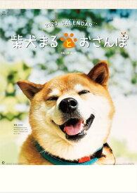 柴犬まるとおさんぽカレンダー  2020年 カレンダー カレンダー2020 令和2年 壁掛けカレンダー 犬カレンダー 【在庫有・即発送】