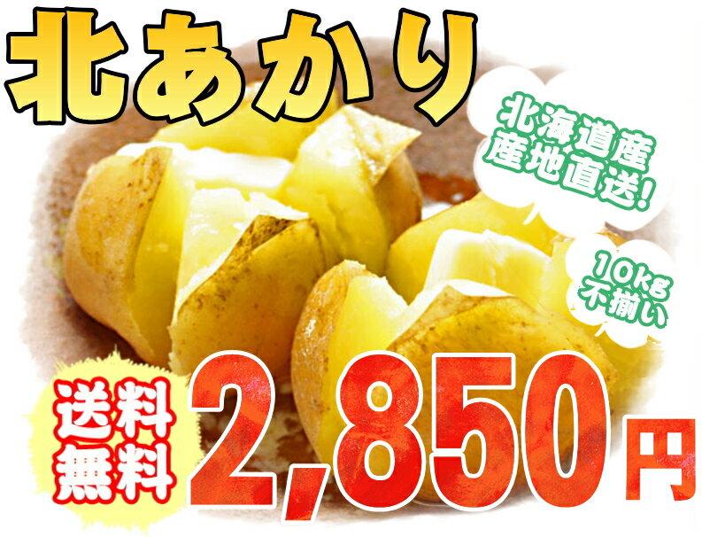 北海道産 産地直送 ジャガイモ キタアカリ 10kg 新じゃが 【M】【送料無料】