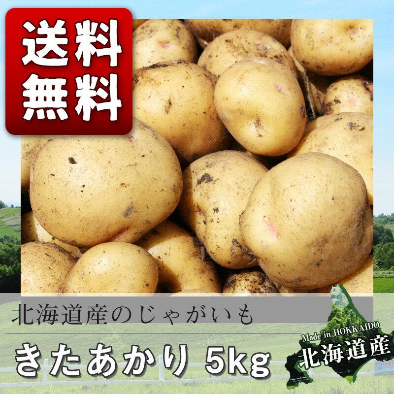 北海道産 ジャガイモ キタアカリ 5kg じゃがいも 【M】【送料無料】