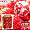 イチゴ農家さん からの 直送品紅ほっぺ たっぷり 600g保証で詰め合わせ〜国産 いちご イチゴ 無添加 送料無料 ストロ…