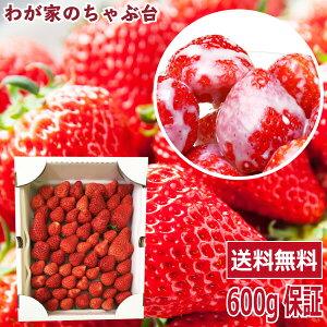 イチゴ農家さん からの 直送品紅ほっぺ たっぷり 600g保証で詰め合わせ〜国産 いちご イチゴ 無添加 送料無料 ストロベリー 無添加 無加糖 フルーツ 果物 くだもの ジャム 訳あり