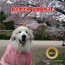 【在庫限りで販売終了】【犬 服】 幼稚園 帽子 日本製 犬用 黄色帽 幼稚園服 超大型犬 グレートピレニーズ バーニーズ ハロウィン イ…