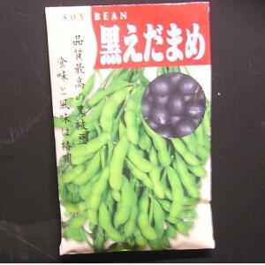 在来種/固定種/野菜のタネ「黒えだまめ〔黒錦枝豆〕50ml約90粒」畑懐〔はふう〕の種【メール便可】