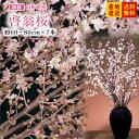 【正月用】山形の啓翁桜(約60〜80cm×7本)【送料無料】【ギフト】【プレゼント】【お正月用】※一部地域は別途送料 お…
