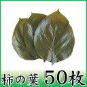 【柿の葉塩漬け 50枚】丁寧に選別、塩漬けされた柿の葉
