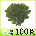 【柏葉(G) 100枚】丁寧に選別された美しい柏の葉