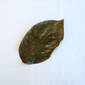 【国産 柿の葉塩漬け 50枚】丁寧に選別、塩漬けされた国産の柿の葉