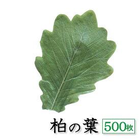 柏葉 500枚 天極堂 緑 和菓子 柏餅 柏餅の葉 端午の節句 こどもの日