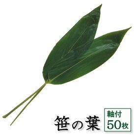 笹の葉 軸付 50枚 天極堂 青笹 国産 飾り葉 敷き葉 ちまき 端午の節句