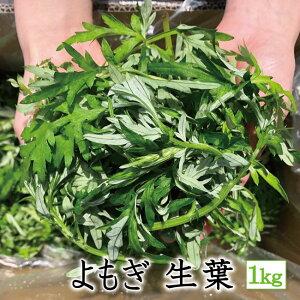 【よもぎ】【生葉】 1kg 国産 農薬不使用 期間限定 手摘み 天然 フレッシュ 青果 フーチバー