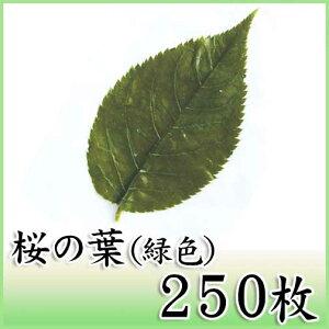 桜の葉塩漬け 緑250枚 天極堂 桜葉 桜餅 和菓子 冷凍