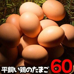 送料無料 高級卵 平飼い 卵 人気 産みたて卵 兵庫県産 60個入り