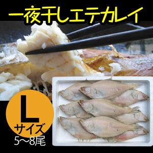 エテカレイ 一夜干し 干物 山陰 日本海 兵庫県産 冷凍便 大 600g 5〜8尾セット
