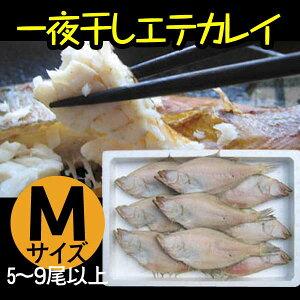 カレイ エテカレイ 一夜干し 干物 冷凍便 山陰 日本海 兵庫県 Mサイズ 9〜12尾セット