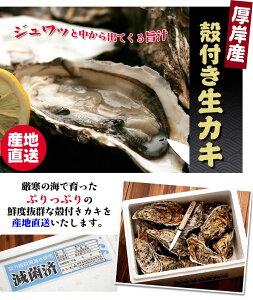 酢牡蛎、焼き牡蠣に最高★厚岸漁業組合から直送厚岸産殻つき生カキ(特大)30個