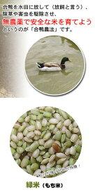 一支国 原の辻遺跡 合鴨農法米 古代米 緑米 1kg 壱岐 長崎県