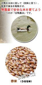 一支国 原の辻遺跡 合鴨農法 古代米 赤米 5kg 壱岐 長崎県