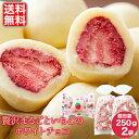 【送料無料】贅沢まるごといちごのホワイトチョコ(500g) / 個包装 チョコレート お菓子 イチゴ バレンタイン 小袋 チ…