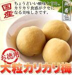 国産豊後梅100%使用無着色☆お徳用大粒カリカリ梅500g(常温商品)日本製梅干しおやつ調味梅漬