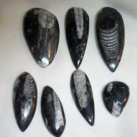 直角貝・オルソセラスの化石 3個セット 送料込み・税込み 大特価品