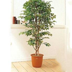 観葉植物 大型 ピュアメイト 白樺 150cm 山崎産業 ED006-150X-MB