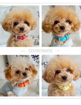 おしゃれでかわいい本革の犬首輪