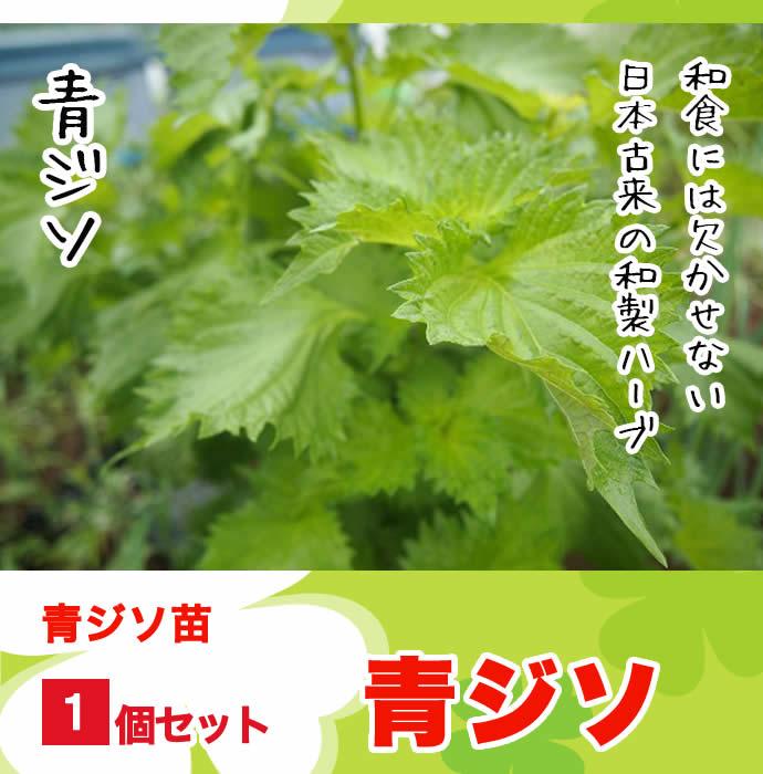 【てしまの苗】H30年3月上旬より順次発送【1株】青ジソ 実生苗  9cmポット 野菜苗