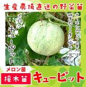 九州・中国地方で大人気の品種
