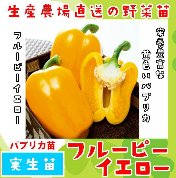 【てしまの苗】パプリカ苗フルーピーイエロー 実生苗 9cmポット 【人気】
