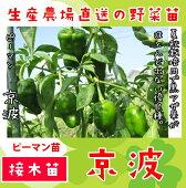 ピーマン【京波】
