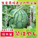 【てしまの苗】スイカ苗 祭ばやし 断根接木苗 9cmポット 【人気】