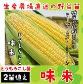 【生産農場直送】トウモロコシ苗味来実生苗9cmポット1ポット2苗植え【人気】