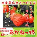 【秋植えイチゴ苗】 あかねっ娘 9cmポット 【人気】