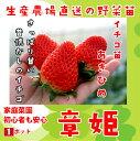 【秋植えイチゴ苗】 あきひめ 9cmポット 【人気】