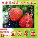 【秋植えイチゴ苗】 宝交早生 9cmポット 【人気】