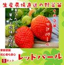【秋植えイチゴ苗】 レッドパール 9cmポット 【人気】