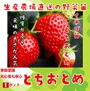 【秋植えイチゴ苗】 とちおとめ 9cmポット 【人気】